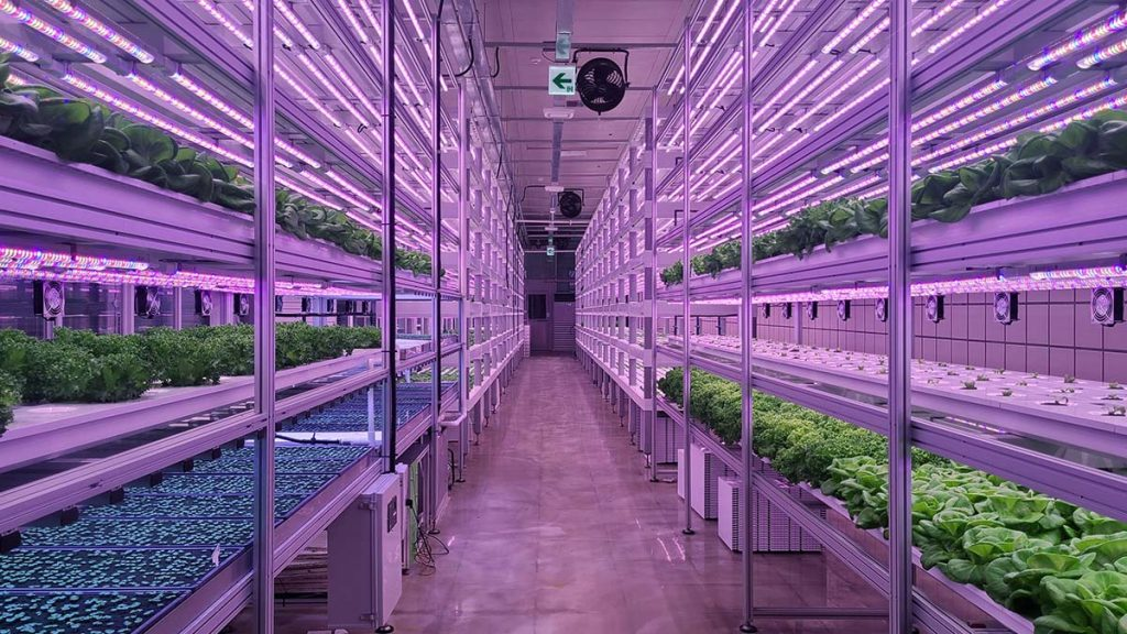 Plants sitting on rows of shelves in vertical farming facility.